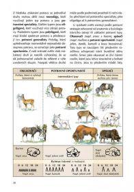 Kniha myslivecká zoologie Druckvo