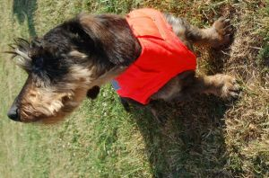 Ochranná vesta pro psa - oranžová Zbraně Šubrt